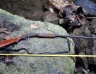 Súng tự chế cướp cò, người đàn ông tử vong trong rừng