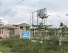 Quảng Ngãi: Trung tâm công nghệ sinh học chỉ để trồng nấm?