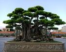 """""""Choáng váng"""" cây sanh cổ được trả giá hơn 20 triệu USD, chủ vẫn không muốn bán"""
