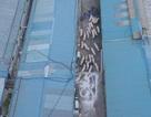 Hàn Quốc đưa quân nhân bắn tỉa đến gần biên giới Triều Tiên diệt lợn