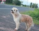 Chú chó trung thành đứng một chỗ đợi chủ suốt 4 năm khiến dân mạng cảm động
