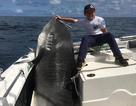 """Nhóc 8 tuổi câu được cá mập """"khủng"""" nặng 314 kg, phá kỷ lục thế giới"""