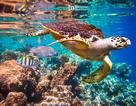 Hảo Hảo bật mí bí quyết để bạn và người thương vi vu Maldives thuận lợi