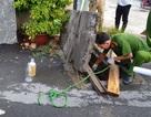 Bắt quả tang công ty giặt công nghiệp xả thải ra sông Soài Rạp
