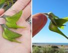 Loài hoa kỳ lạ có hình dáng y hệt chú chim thu hút hàng chục ngàn lượt tương tác