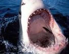 """Giải mã """"giác quan thứ 6"""" giúp cá mập phát hiện con mồi ngay cả trong bóng tối"""