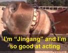 Chết cười với chú ngựa giả chết mỗi khi bị người cưỡi