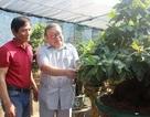 """Nông dân """"mách nước"""" trồng mai bonsai, thu nhập vài trăm triệu đồng mỗi năm"""