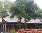 Nhiều sai phạm trong quá trình tôn tạo di tích chùa Bạch Tượng tại Thanh Hoá