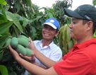 An Giang: Hiệu quả từ chuyển đổi cầy trồng trên vùng đất cù lao Chợ Mới