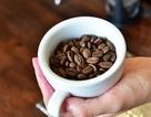 Shin Cà phê đã chọn từng hạt cà phê như thế nào?