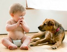 Giữ trẻ an toàn khi nhà nuôi chó