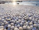 """Kỳ lạ hiện tượng băng """"tròn như trứng"""" tràn ngập bờ biển Phần Lan"""