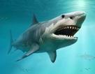 Mười ba chiếc răng cá mập thời tiền sử được tìm thấy trong hang động Mexico