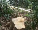 Trưởng phòng bảo vệ rừng bị kẻ lạ mặt hành hung tại trụ sở