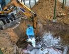 Xử nghiêm việc khai khống lợn bị tiêu hủy do dịch tả lợn châu Phi