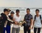 Giải cứu rùa biển mắc kẹt vào tấm lưới trôi trên biển