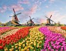 Săn học bổng du học Hà Lan tại Đại học Saxion