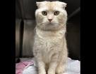 Một người đàn ông đã bị phạt hơn 46 triệu đồng vì gửi mèo bằng đường bưu điện