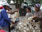 Tết Đoan Ngọ: 1 buổi sáng bán cả nghìn con vịt