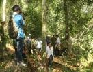 Sẽ kiểm tra toàn bộ diện tích rừng đặc dụng tại Võ Nhai