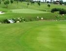 Đại gia quật gậy golf vào đầu khiến nhân viên phục vụ bất tỉnh