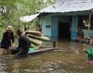 Vỡ đê, hơn 20 ngôi nhà chìm trong nước