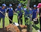 100 doanh nhân trồng cây vì môi trường