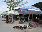 Đà Nẵng tăng cường công tác phòng chống dịch cúm gia cầm