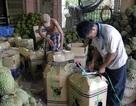 Giá sầu riêng bất ngờ tăng vọt, nông dân thu lời bạc tỷ