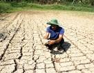Hạn, mặn gây thiệt hại hơn 2.280 tỷ đồng