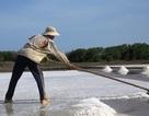 Diêm dân tồn hàng chục nghìn tấn muối ngoài đồng
