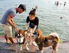Người Hà Nội cùng thú cưng tắm hồ Tây giải nhiệt