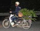Xe máy chở gỗ lậu vượt trạm như... bỡn!