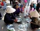 Quảng Nam bác bỏ thông tin cá chết dạt vào Cù Lao Chàm
