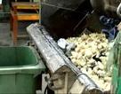 Tiêu hủy hàng trăm kg măng tươi có chất vàng ô