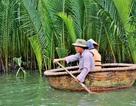 Phục hồi rừng dừa nước ven biển
