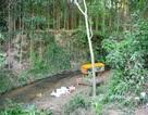 Truy tìm tung tích người đàn ông treo cổ trong rừng