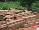 Khởi tố vụ phá rừng pơmu ở biên giới Việt - Lào
