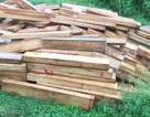 Hàng chục phách gỗ pơmu được giấu gần... trạm biên phòng