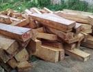 Phát hiện thêm hơn 60 súc gỗ pơmu gần trạm biên phòng