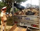 Bắt xe tải chở gần 4 tấn da trâu, bò bốc mùi hôi thối