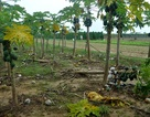 Quảng Nam: Vùng rau trồng Tết thiệt hại nặng nề vì lũ muộn
