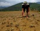 Ít nhất 5 người chết trong lũ ở Quảng Nam