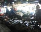 """Vụ cá chết hàng loạt: Tàu cá """"ế ẩm"""" sau những chuyến vươn khơi"""
