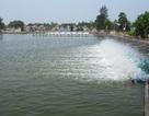 Thả 10 vạn con tôm để kiểm tra độ an toàn của nước biển
