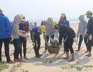 Hơn 1.000 đoàn viên, thanh niên tham gia làm sạch bãi biển