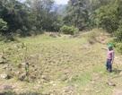 Quảng Trị: Đơn vị khai thác quặng cam kết sẽ hỗ trợ cải tạo ruộng bị bồi lấp cho người dân