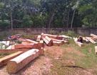 Rừng tự nhiên đầu nguồn Vĩnh Ô đang bị chặt phá