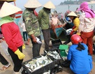 Ngư dân băn khoăn việc xác định ranh giới hải sản an toàn